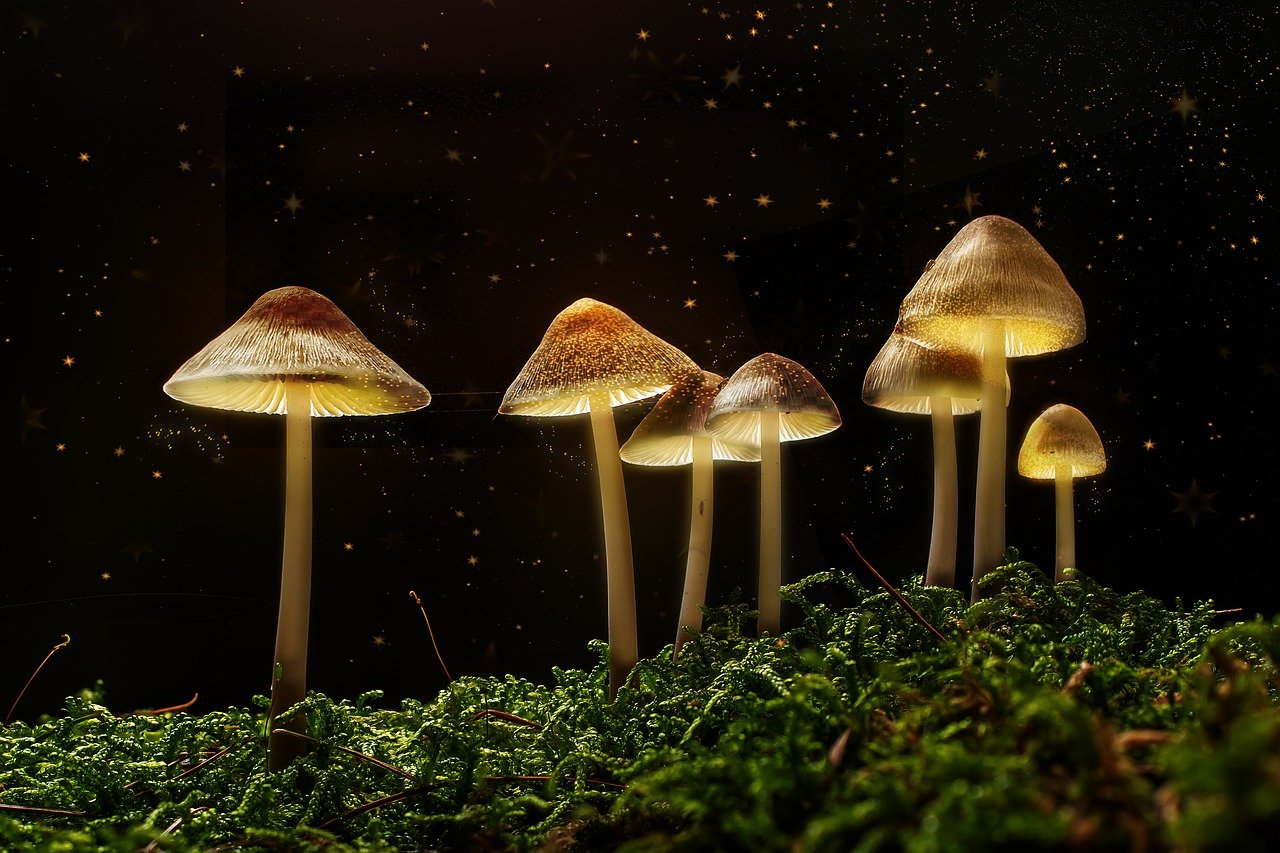 How about Growing Your Magic Mushrooms